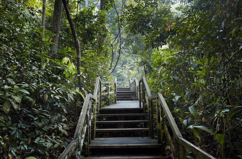 forett-at-bukit-timah-bukit-timah-nature-reserve-singapore